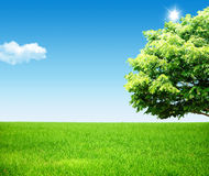Landscape with tree Stock Image