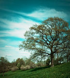 Landscape with a tree Royalty Free Stock Photos