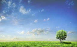 Landscape with tree. Meadow with green grass and blue sky with clouds and tree Royalty Free Stock Photo
