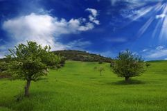 Landscape with tree. Sardinia view of landscape with tree and blue sky clouds Stock Photography