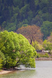 Landscape - a tree above the water. Stock Images