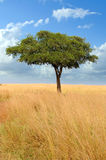 Landscape with tree in Africa Stock Photos