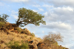 Landscape with tree in Africa Stock Photo