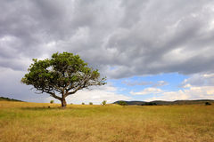 Landscape with tree in Africa Royalty Free Stock Photo