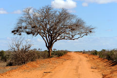 Landscape with tree in Africa Royalty Free Stock Images