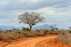 Landscape with tree in Africa Royalty Free Stock Photography