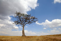 Landscape with tree in Africa Stock Images
