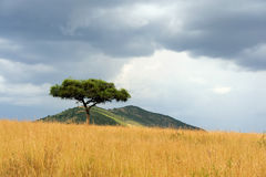 Landscape with tree in Africa Stock Image