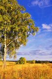 Landscape with tree and blue sky Royalty Free Stock Images