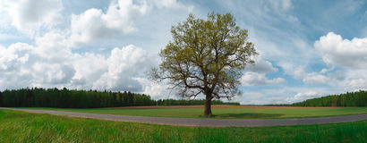 Landscape with tree Royalty Free Stock Photos