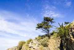 Landscape with a tree on a cliff Stock Images