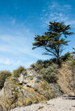 Landscape with a tree on a cliff Royalty Free Stock Images