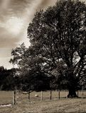 Landscape tree Stock Photography