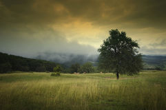 Landscape with tree and dramatic sky Royalty Free Stock Photography