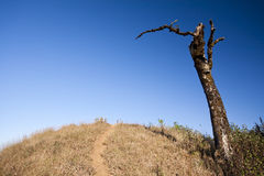 Landscape with tree and dry grass on blue sky Royalty Free Stock Photography
