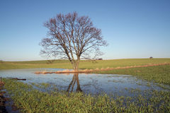 Landscape tree field stock images