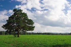 Landscape  tree field Stock Photography