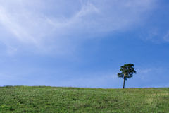 Landscape tree on the field royalty free stock photos
