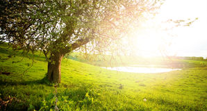 Landscape with tree. On the field Stock Image