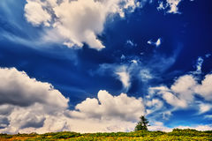 Landscape tree and field of green fresh grass under blue sky. Dramatic scene. Europe Stock Photo