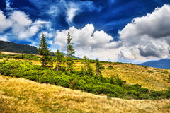 Landscape tree and field of green fresh grass under blue sky royalty free stock image