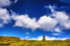 Landscape tree and field of green fresh grass under blue sky. Europe Stock Photos