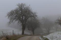 Tree in fog in green field. Landscape / Tree in fog in green field Royalty Free Stock Photos