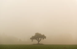Landscape tree in fog Royalty Free Stock Photography