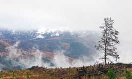 Landscape with tree and foggy mountains Royalty Free Stock Photos