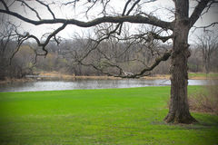Landscape with tree and green grass Royalty Free Stock Photos