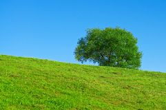 landscape with a tree on a green hill Royalty Free Stock Photography