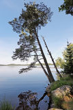 Landscape with tree growing over lake Royalty Free Stock Photos