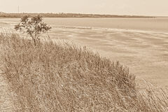 Landscape with tree and herbs on the bay, sepia Stock Image
