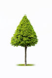 Landscape tree isolated Stock Images