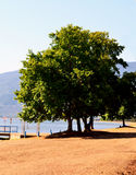 Landscape tree and lake Stock Images