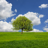 Landscape with tree on meadow Royalty Free Stock Image