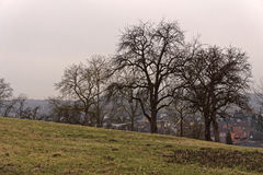 Landscape, tree and meadow Royalty Free Stock Image