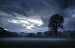 Landscape with tree on meadow and fog dusk Royalty Free Stock Photo