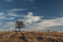 Landscape with tree Stock Photo