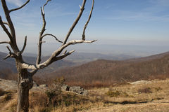 Landscape of a tree in the mountains. Beautiful nature image of a barren tree in the Blue Ridge Mountains of Virginia Stock Photography