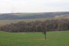 Landscape with tree near Čachtice castle Stock Image