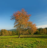 Landscape and a tree with red leaves Stock Photo
