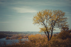 Landscape with tree and river Stock Photography