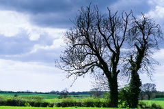 Landscape - tree silhouettes in rural Yorkshire against a dramatic cloudy sky background Royalty Free Stock Image