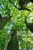 Landscape, tree in a sky. Spring landscape, tree on a sky background Royalty Free Stock Image