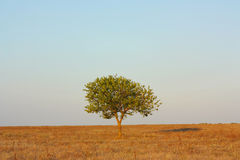 Landscape, tree in the steppe Royalty Free Stock Images