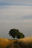 Landscape with tree in summer sun at dawn Stock Photography