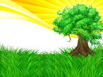 Landscape tree and sun background Royalty Free Stock Image