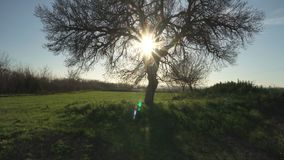 Landscape, tree, sun through branches, spiritual, meditation. Motion camera tracking. Sun through branches, spiritual, meditation. Motion camera tracking stock footage