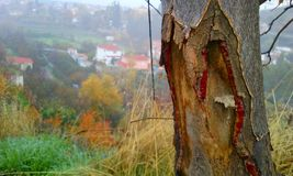 landscape of tree trunk in the forest stock photography